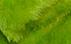Zelená PL 11